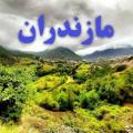 علیرضا عباسی
